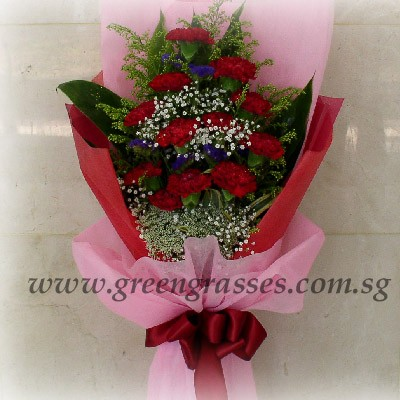 hb08048 lsw 12 red carnation