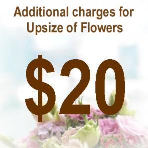 AU02015-$20 Upsize Charge