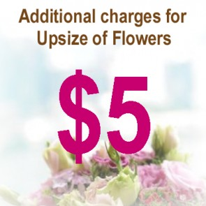 AU00504-$5 Upsize Charge