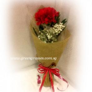 HB02529-SW1F-1 Red Carnation