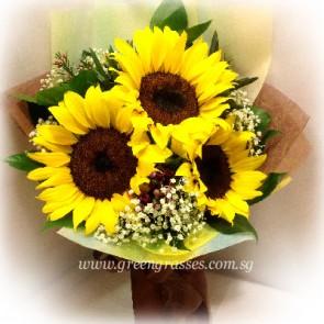 HB06550D-GLSW-3 Sunflower