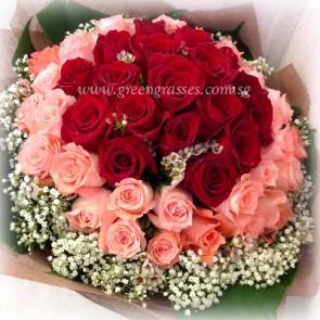HB16008-LLGRW-48 Rose(Red & Pk)