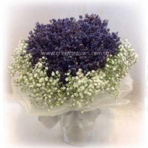 WB10046-BOQ-Lavender w/BB