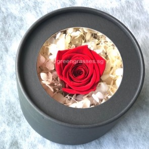 BXP05554-1 Red Rose Everlasting Preserved 永生花 in Box