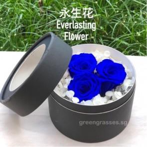 BXP07540-Dk Blue Roses Everlasting Preserved 永生花 in Box