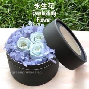 BXP07542-3 Lt Blue Roses Everlasting Preserved 永生花 in Box