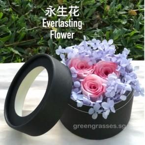 BXP07544-3 Pk Roses Everlasting Preserved 永生花 in Box
