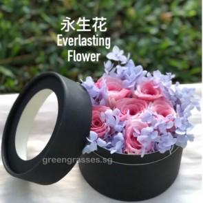 BXP09065-6 Pk Roses Everlasting Preserved 永生花 in Box