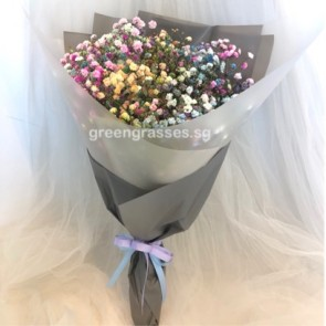HB05527-Rainbow BB Baby's Breath