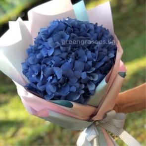 HB05555-PW-1 Blue Hydrangea