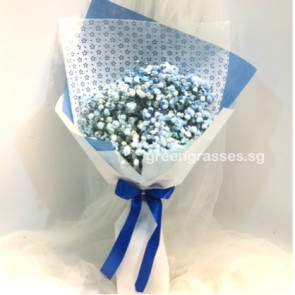 SCHB03567-Self Collect-Blue BB Baby's Breath
