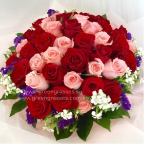 SCV28507-Self Collect-LLGRW-48 Rose(Red & Pk)